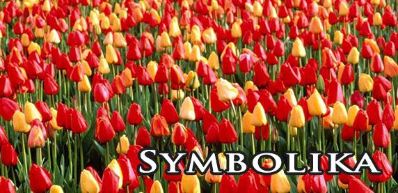 Symbolika I Znaczenie Kwiatów Dekoracje4upl Dekoracje